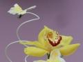 fiori primavera
